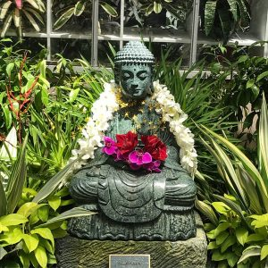 Buddha at Selby Gardens