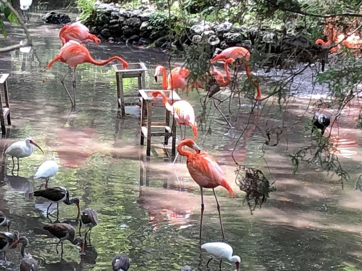 Flamingos Homosassa Springs