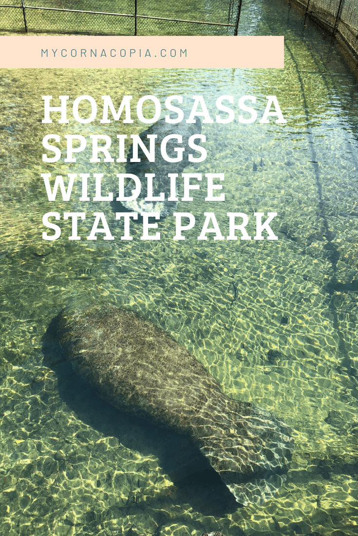 Visit Homosassa Springs Wildlife State Park to see interesting animals in rehab