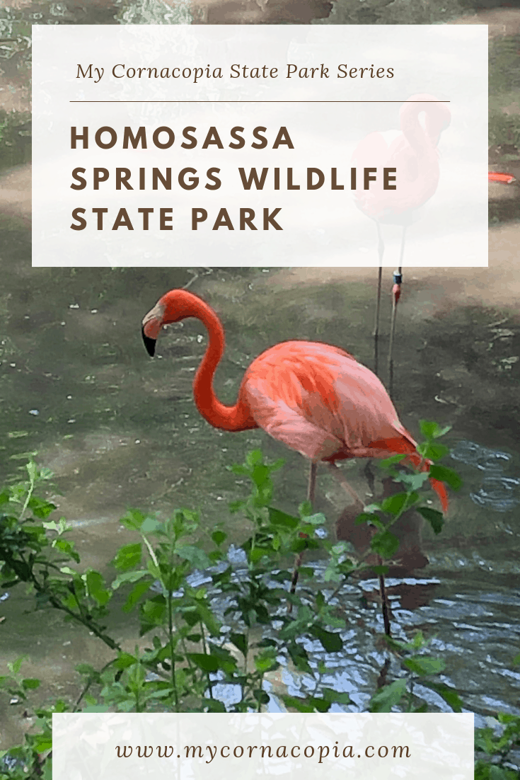 Visit Homosassa Springs Wildlife State Park to see interesting animals in rehab #FLStateParks #Florida #travel