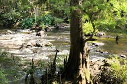 Florida State Parks: #6 Hillsborough River State Park