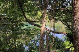 Florida State Parks: #5 Homosassa Springs Wildlife State Park