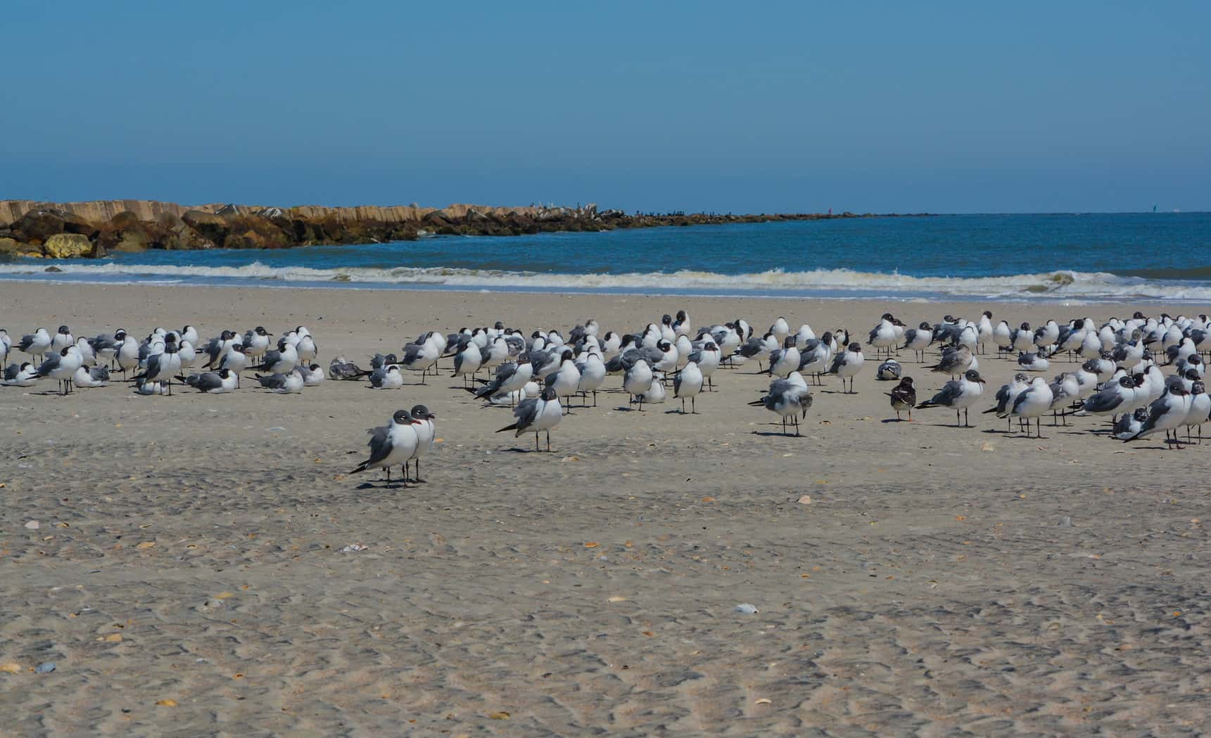 Birds at family-friendly beach Fort Clinch State Park Florida