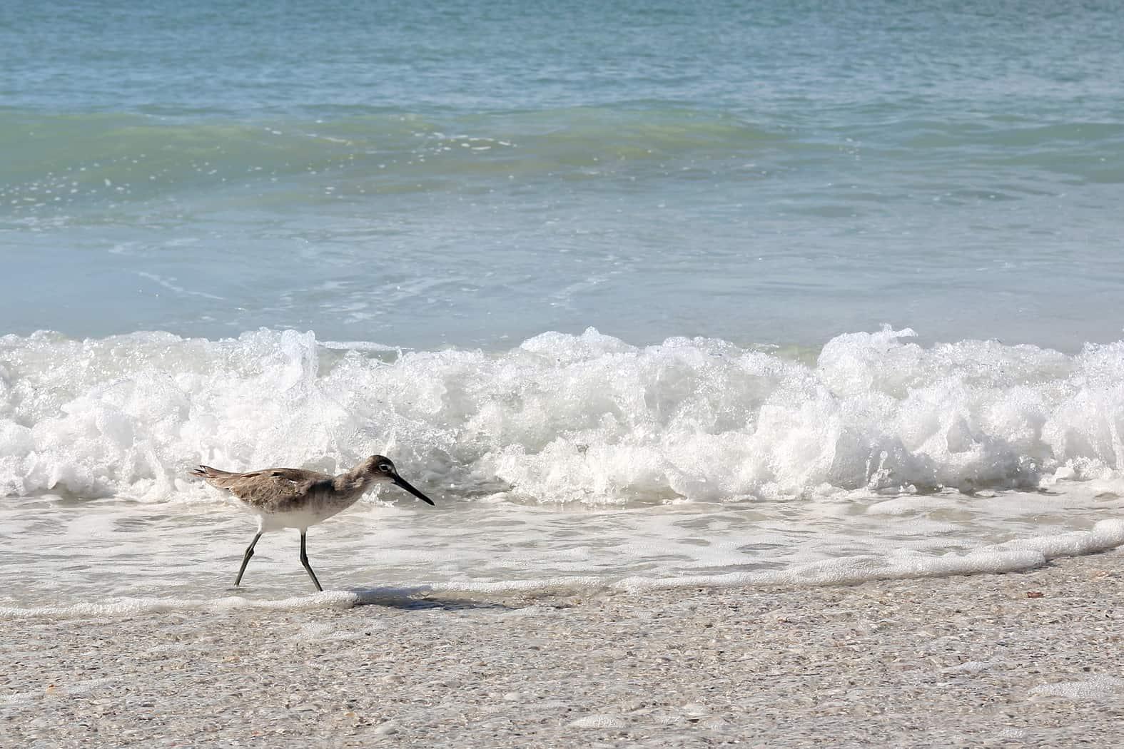 Family-friendly beach of Florida