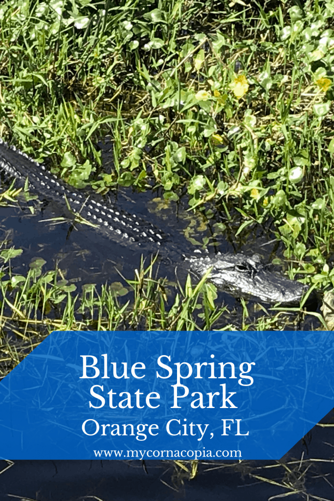Blue Spring State Park - lots of wildlife
