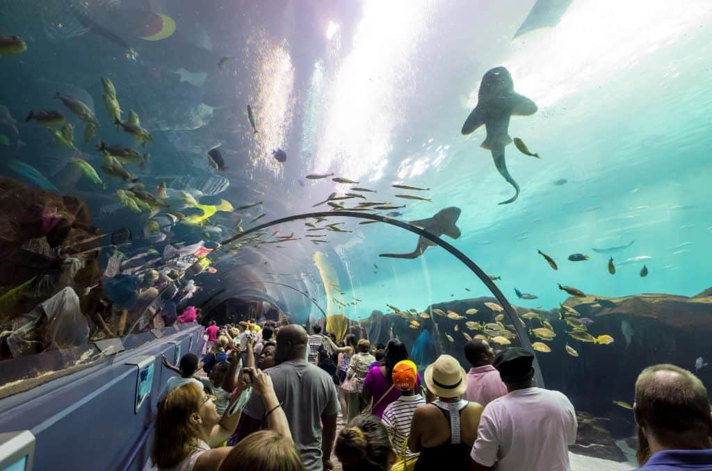 Virtual Zoo - Georgia Aquarium